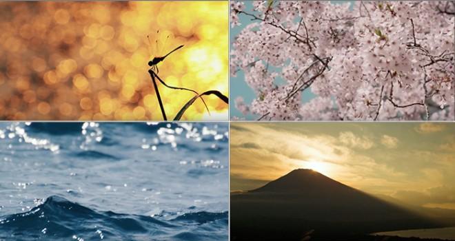 素敵だ!自然を美しいと思える感性…印傳屋がものづくりの心をテーマに映像公開