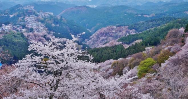 初音ミクより3世紀早い!千本桜といえばやっぱり不朽の名作「義経千本桜」は外せない