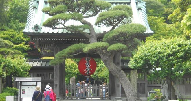 紫陽花だけじゃない♪仏像や美しい草木、極楽浄土とも呼ばれる鎌倉・長谷寺の見どころを紹介