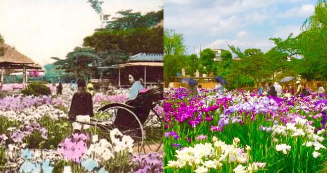 今に残る「名所江戸百景」最高にフォトジェニックな東京・堀切の花菖蒲が見ごろ