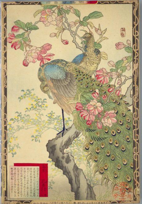 日本文化と今をつなぐ。Japaaan幸野楳嶺(こうのばいれい)「楳嶺花鳥画譜(ばいれいかちょうがふ)」RANKING ランキング