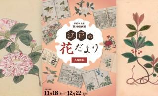 観覧無料!紅葉の見頃にぴったり、江戸時代の人々の植物への関心に迫る企画展「江戸の花だより」