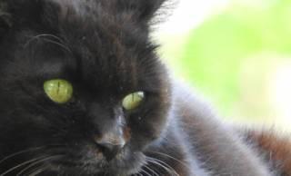 日本初の猫バカ日記!?臣下を経て即位した宇多天皇を支えたのは、1匹の猫だった
