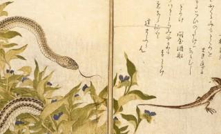 「画本虫撰」はまさに昆虫図鑑!喜多川歌麿は昆虫を描かせてもスゴいんだから!