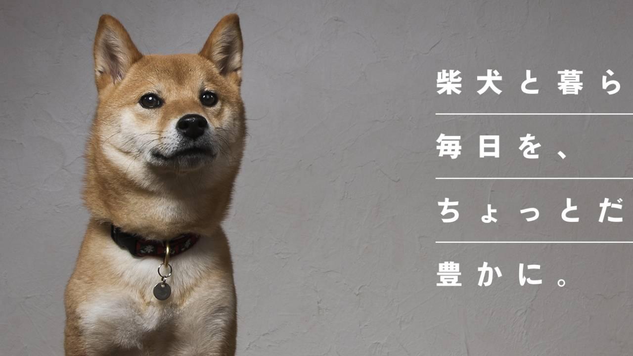 見続けちゃうやつだ!柴犬だけに特化したメディア「柴犬ライフ」がオープン