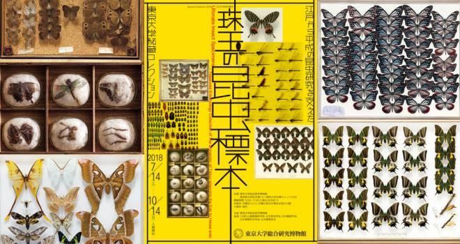【無料】江戸時代の昆虫も!日本最古の超貴重な標本を含む5万点もの昆虫標本を一堂に展示「珠玉の昆虫標本 」開催
