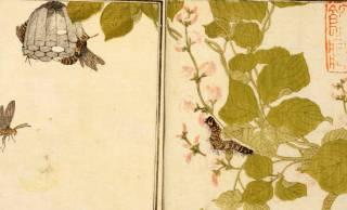 大正時代は50種以上もの昆虫を食べていた!?日本の昆虫食の歴史をたどると驚くべき実態が