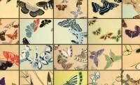 ズバ抜けたセンス!多彩な姿で舞う蝶を描いた神坂雪佳「蝶千種」の驚異的な創造力に刮目せよ!