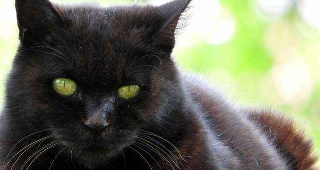 名前はまだ無い…夏目漱石「吾輩は猫である」のモデルの猫は本当に名無しだった