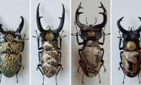 まるで漆工芸のように昆虫標本を装飾する樋口明宏さんのアート作品に心惹かれる!
