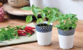 みつ葉やシソなど和の薬味をオシャレに栽培できる「染付小紋薬味小鉢」が素敵!
