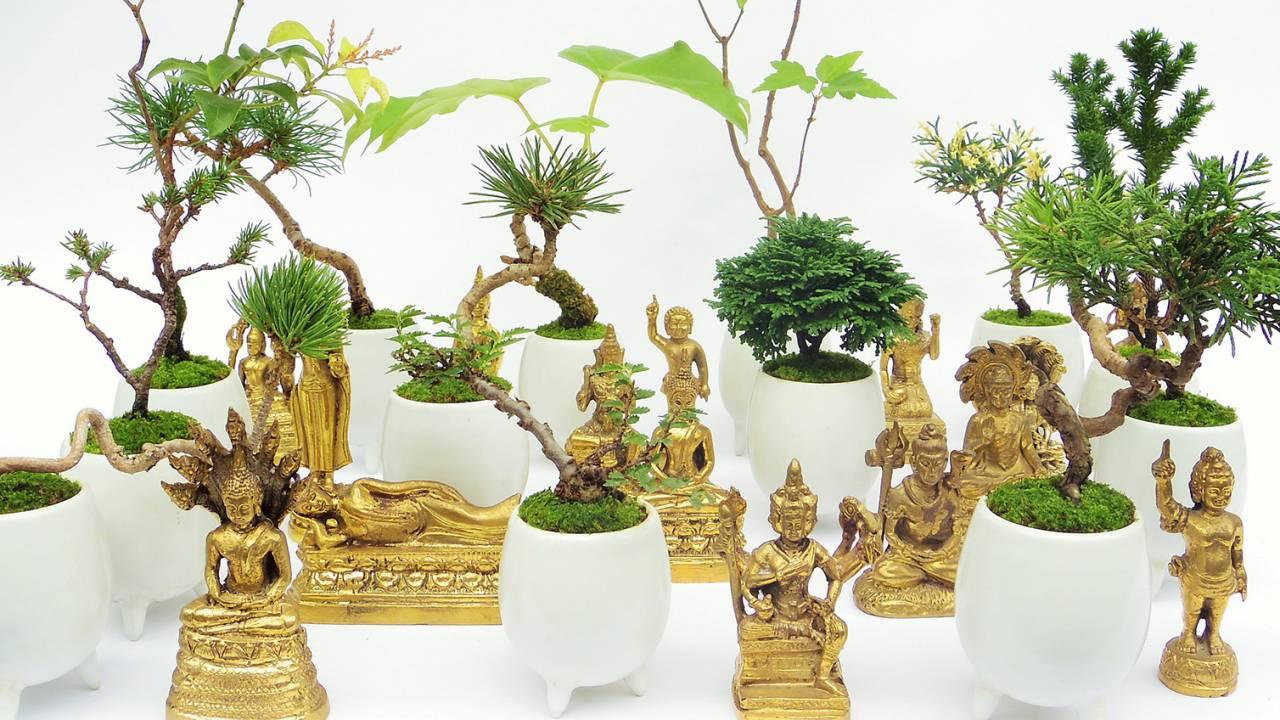 なんと仏像と盆栽のセット!?これまでにない組み合わせでユニークな世界観が広がる盆栽が新発売!