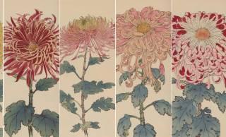 繊細で美しい!日本の国花「菊」の様々な品種を描いた明治時代の木版画「契花百菊」