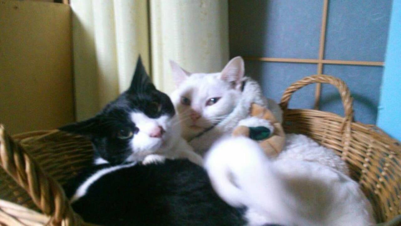 「ねこばば」の由来は猫の婆!?本当は「猫のうんこ」のことなんです