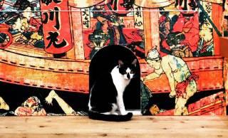 にゃんこ好き急げ!江戸版の猫カフェ「江戸ねこ茶屋」がいよいよフィナーレへ!