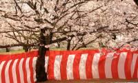 「赤白」ではだめなの?日本人はなぜ「紅白」にこだわるのか?