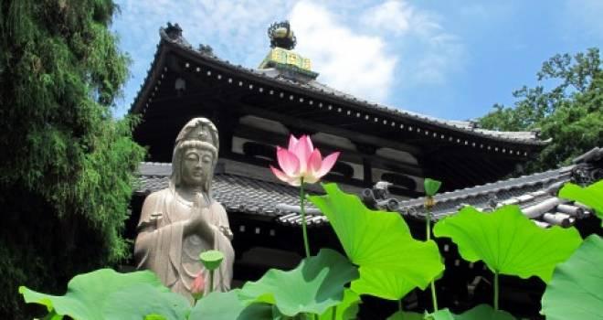 日本の仏教に海外の仏教…日本だけでも宗派がいろいろ。いったいどこがどう違うの?