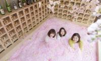 映えがスゴい!桜の花びらに埋もれながら佐賀のお酒が堪能できる「SAKURA CHILL BAR」開催!