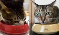 カラーも豊富!伝統工芸の漆塗りで仕上げたワンランク上の猫用お椀「おねこ椀」登場!