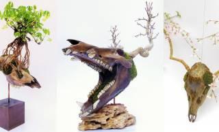 独創的な世界観がステキ!動物の頭蓋骨と盆栽を融合させた「スカル 盆栽」の新作が登場