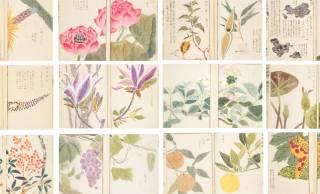約2000種もの植物を写生!江戸時代に作られた日本で最初の植物図鑑「本草図譜」