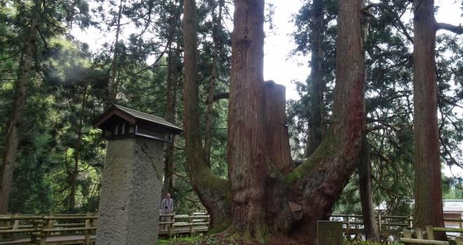 絶景の映えスポット!樹齢1400年、あの縄文杉を上回る日本一の幹の太さを誇る「将軍杉」を紹介