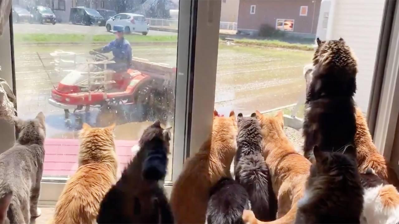 田植えキターー!田植え機にトキメいて続々と集まってくる猫ちゃんたちにほっこり♡