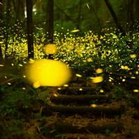 語源は都々逸からきている説…「鳴く蝉よりも鳴かぬ蛍が身を焦がす」~日本のことわざ 恋愛編 その2