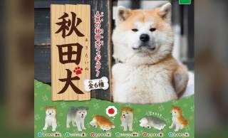 もふもふ感にほっこり♪大人気、秋田犬のミニフィギュアが可愛すぎるよ〜!