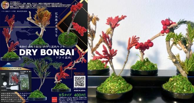 なんと盆栽がカプセルトイに!本物の木と葉を使ったミニマムサイズの盆栽キット「ガチャ盆」