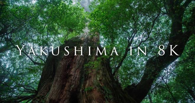 これ日本です!太古の森・屋久島を8K映像で撮影した圧巻の美麗映像「Yakushima in 8K」