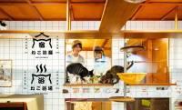 室内から猫様たちをじっくり観察!保護猫カフェ併設の宿泊施設「ねこ浴場&ねこ旅籠」がオープン