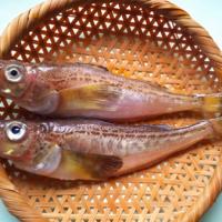 神の魚と書いて「ハタハタ(鰰)」。で、なぜハタハタは神なのか?名前の由来を紹介