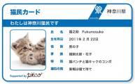 神奈川県が県内で飼育されている猫への「猫民カード」の発行を開始