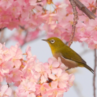 雛月、蚕月、病月…3月には別称がたくさん!3月の古称「弥生」にはどんな意味があるのか?