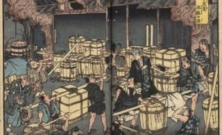 コレラのせいでニホンオオカミが絶滅?江戸時代に流行した疫病に学ぶ、今私たちにできること