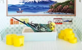 レトロ銭湯みたいな小鳥のための水浴び場「バード銭湯」が可愛いよ〜!