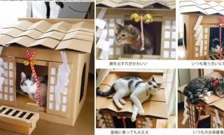愛猫がねこ神様になっちゃうダンボールハウス「ネコ神社ハウス」がニャン可愛いよ♡