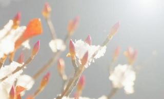 いくつ知ってる?梅見月、恵風、雪消月…如月だけじゃない2月の別名を紹介