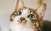 猫の日だけじゃない?忍者、竹島、聖徳太子…2月22日の色んな記念日を紹介!