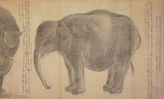 江戸に異国の動物がやって来た!大フィーバー起こしたゾウと尿が薬とまで謳われたラクダ