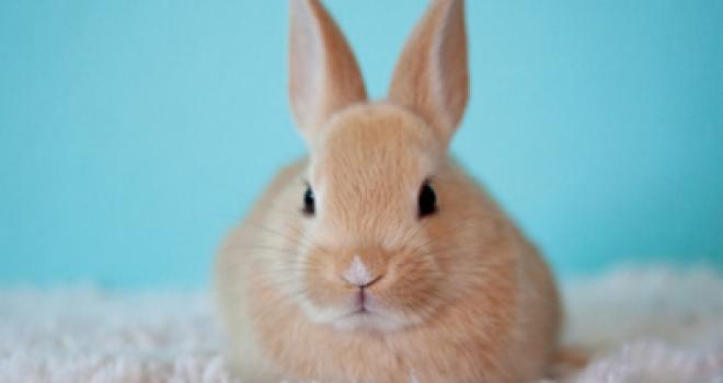 ウサギと何か関係が?4月の旧称・卯月(うづき)の由来。4月の別名もいろいろ紹介
