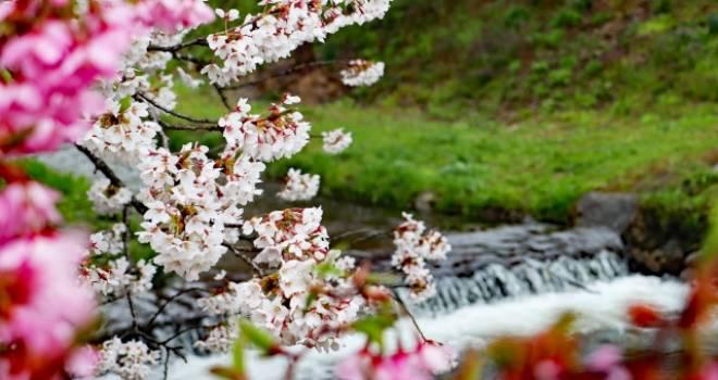 さらさら流れる「春の小川」はいずこ?東京五輪を機に地下に埋設され渋谷の地下でひっそりと【前編】