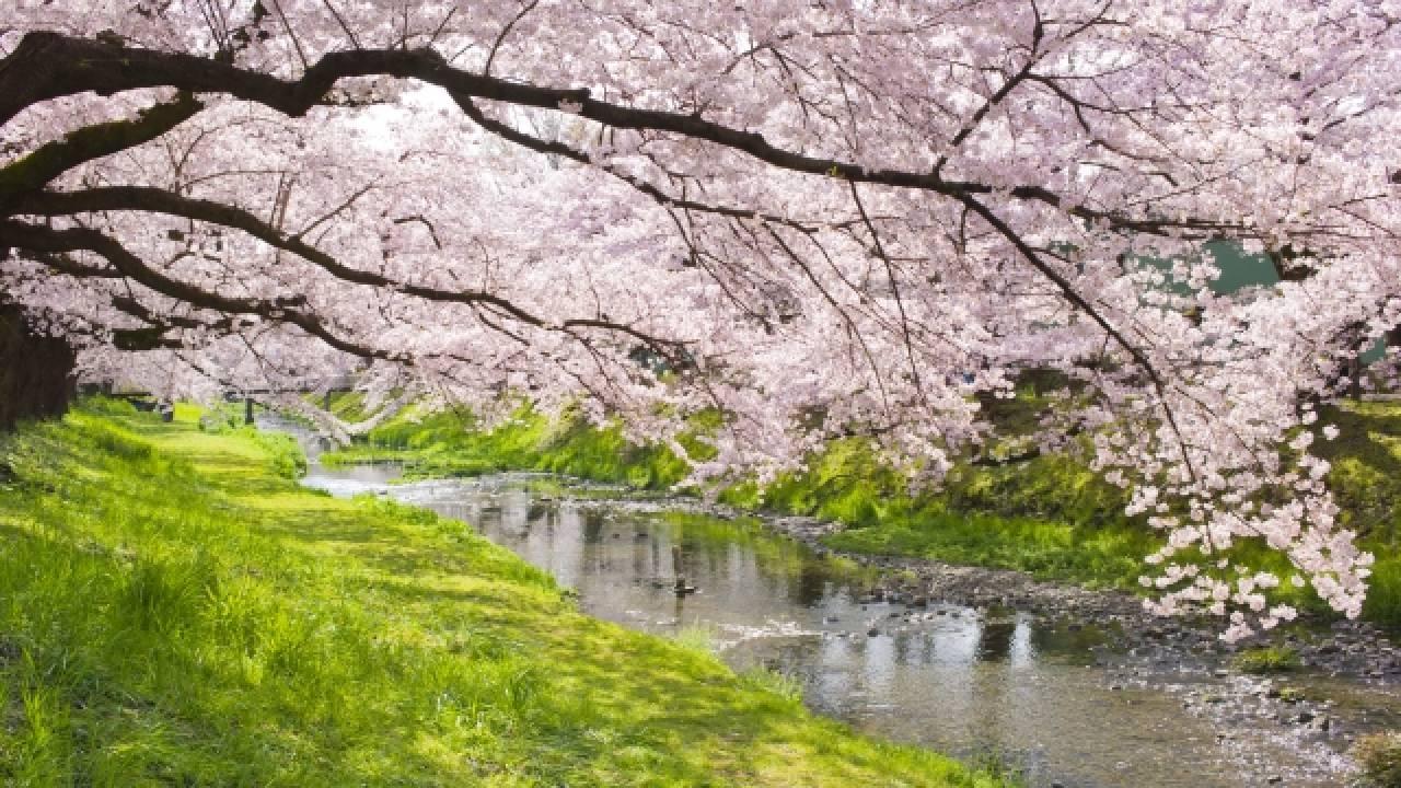 さらさら流れる「春の小川」はいずこ?東京五輪を機に地下に埋設され渋谷の地下でひっそりと【後編】