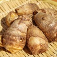 十五夜も十三夜も正月もサトイモ!日本では古くから神聖な食材とされてきた「里芋」の歴史