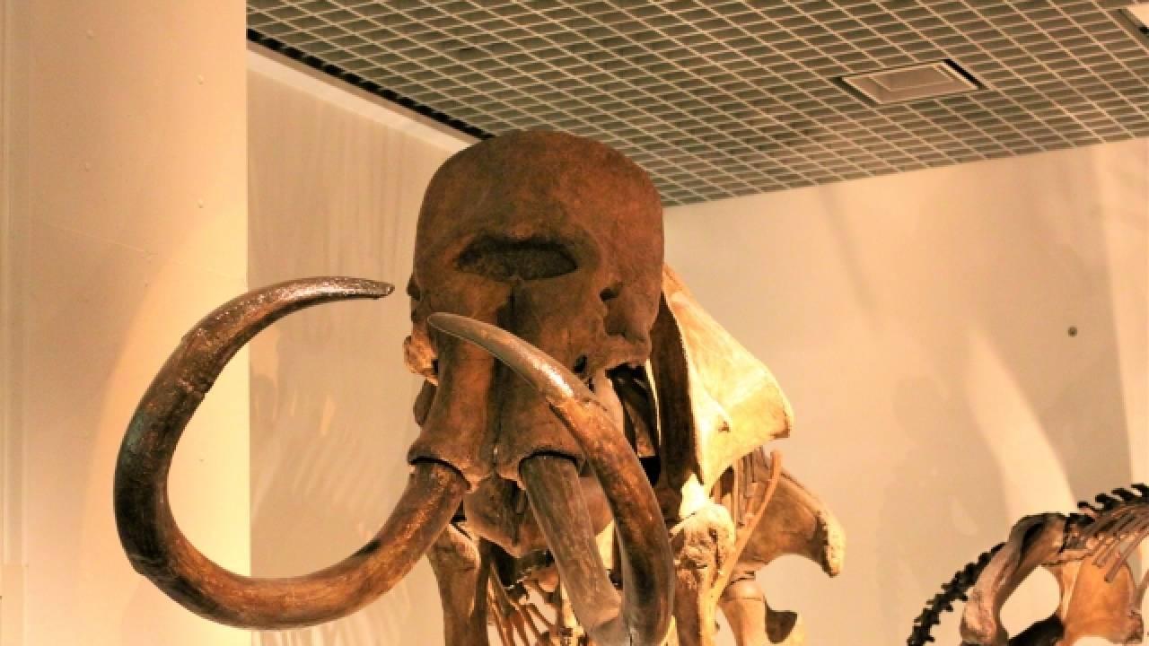 日本史を2万年も増やした男「相澤忠洋」を君は知っているか?