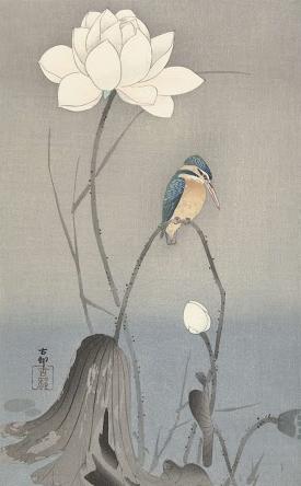蓮の花とカワセミ 画:小原古邨 出典:アムステルダム国立美術館