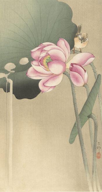 蓮の花と雀 画:小原古邨 出典:アムステルダム国立美術館所蔵