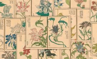 """妖艶さもステキ!朝顔ブームの江戸時代に描かれた""""変化朝顔""""の図譜「朝かがみ」が素晴らしい"""