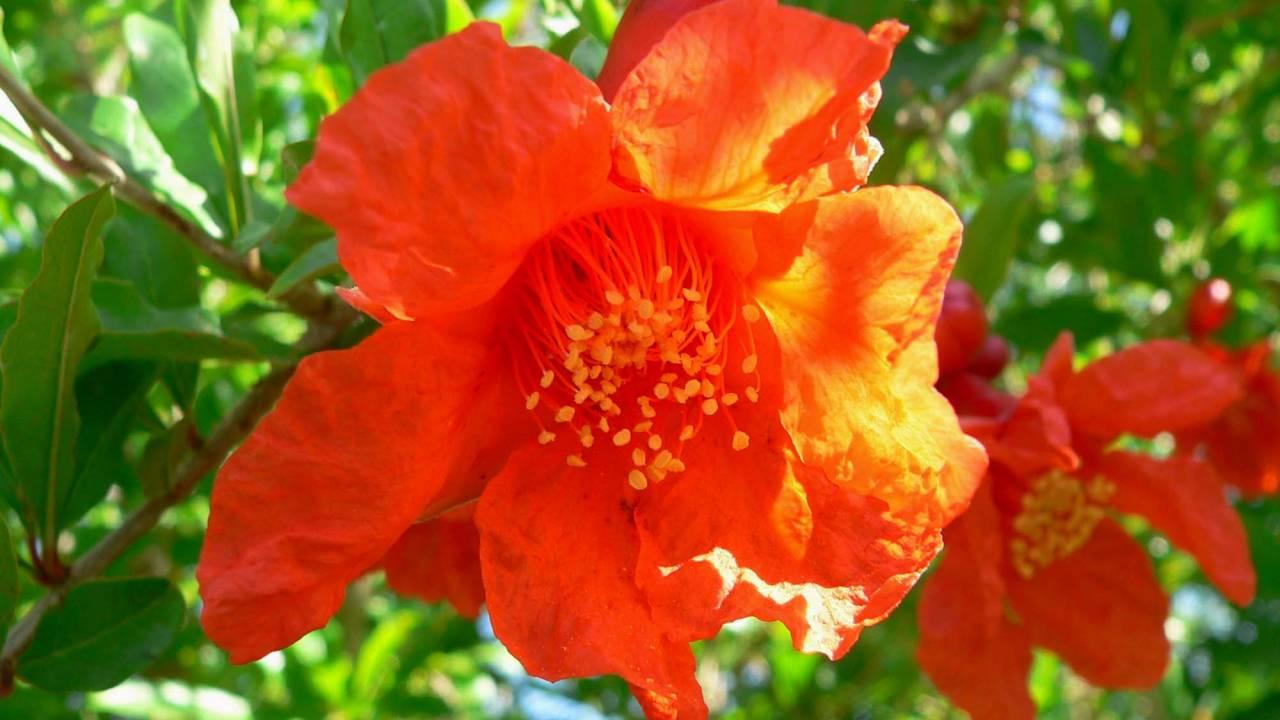 「紅一点(こういってん)」という言葉はあの果実の花が由来。本当の意味や類語も合わせて紹介